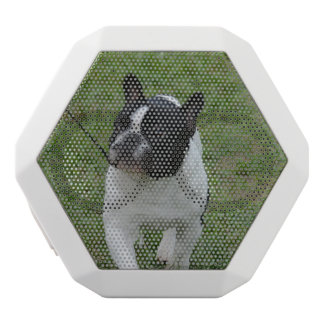 Sweet French Bulldog White Boombot Rex Bluetooth Speaker