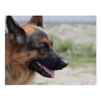 Sweet German Shepherd Dog Postcard