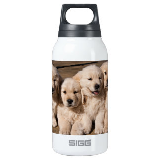 Sweet Golden Retriever Puppies Insulated Water Bottle