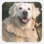 Sweet Golden Retriever Stickers
