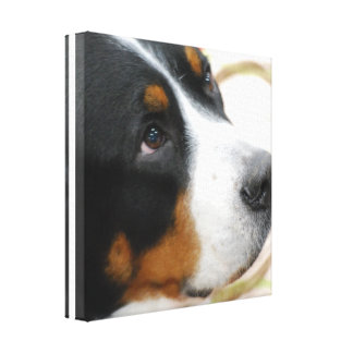 Sweet Greater Swiss Mountain Dog Canvas Print