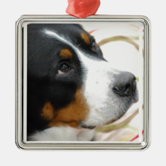 Sweet Greater Swiss Mountain Dog Christmas Tree Ornaments