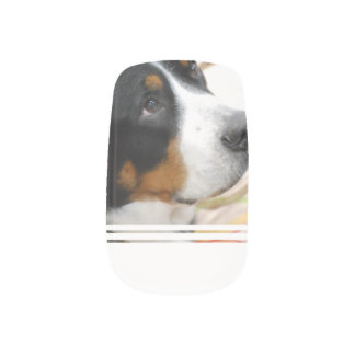 Sweet Greater Swiss Mountain Dog Minx ® Nail Wraps