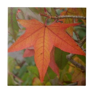 Sweet Gum Leaf Tile