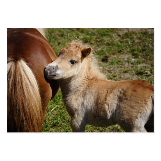 Sweet Haflinger Foal Pack Of Chubby Business Cards