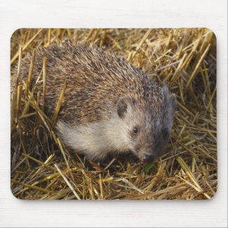 Sweet Hedgehog In Stubble Field Mouse Pad
