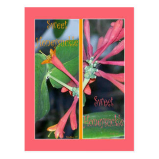 SWEET HONEYSUCKLE BOOKMARKS POSTCARD