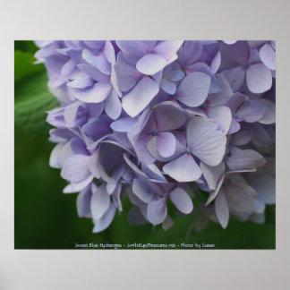 Sweet Hydrangea Flower Photography Poster Print