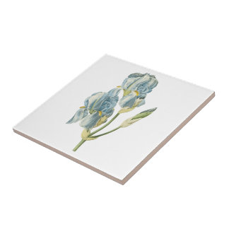 sweet iris(Iris pallida) by Redouté Small Square Tile
