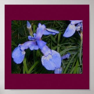 Sweet Iris Poster