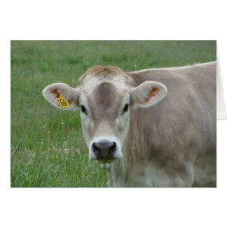 sweet jersey cow greeting card