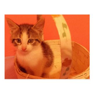 sweet kitten in basket postcard