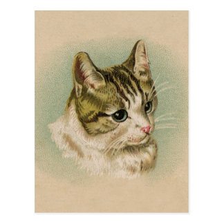 Sweet Kitten Postcard