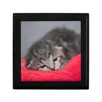 Sweet kitty gift box
