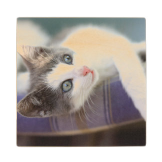 Sweet Kitty In Plaid Bed Wood Coaster