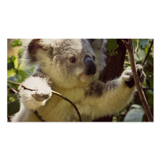 sweet koala baby pack of standard business cards