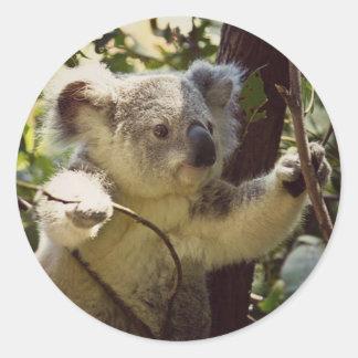 sweet Koala baby Round Sticker