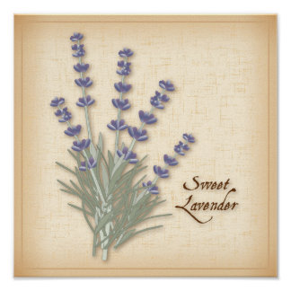 Sweet Lavender Herb and Flowers Poster