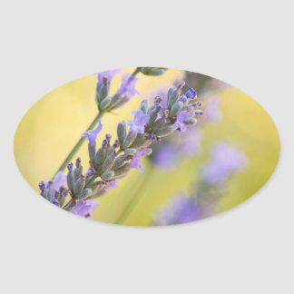 Sweet lavender oval sticker