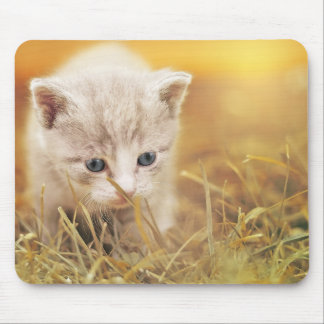 Sweet Little Cat Mouse Mat