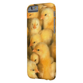 Sweet Little Chicks Barely There iPhone 6 Case