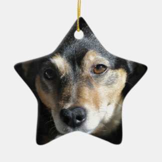 Sweet Little Dog Posing for the Camera Ceramic Star Decoration