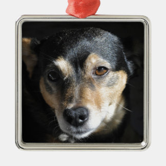 Sweet Little Dog Posing for the Camera Christmas Ornament