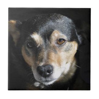 Sweet Little Dog Posing for the Camera Tile