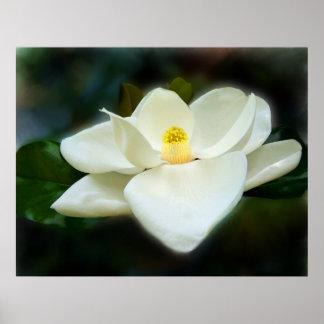 Sweet Magnolia Fine Art Prints