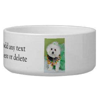 Sweet Maltese in Halloween Colors Dog Water Bowls