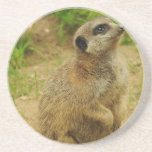 Sweet Meerkat Coaster