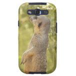Sweet Meerkat Galaxy S3 Covers