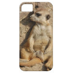 Sweet Meerkat iPhone 5 Covers