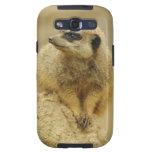 Sweet Meerkat Samsung Galaxy SIII Case