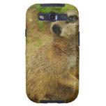 Sweet Meerkat Samsung Galaxy SIII Covers