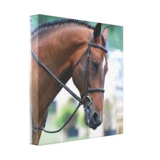 Sweet Morgan Horse Canvas Print