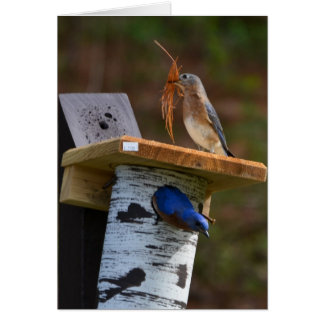 Sweet nesting bluebirds card