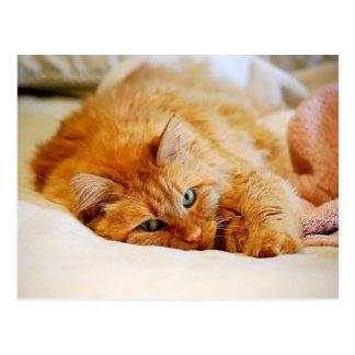 Sweet Orange Cat Postcard