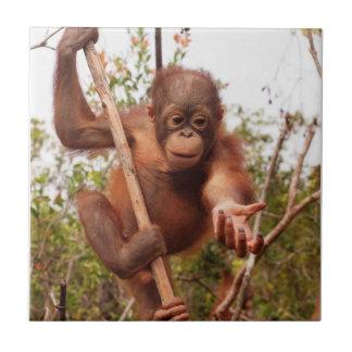 Sweet Orphan Orangutan Charity Tile