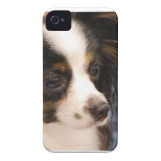 Sweet Papillon Puppy Case-Mate iPhone 4 Cases