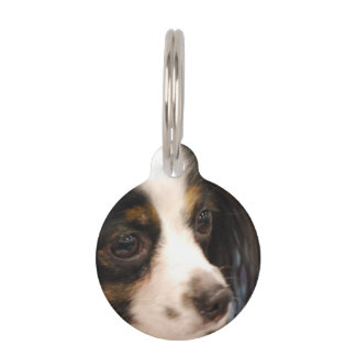 Sweet Papillon Puppy Pet Tags