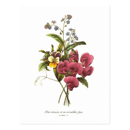 Sweet Pea and Viola Post Cards