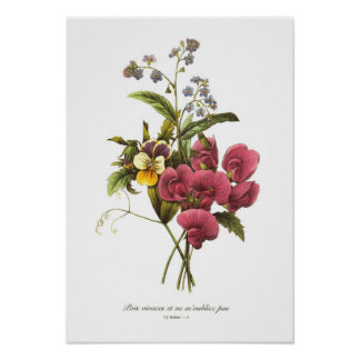 Sweet Pea and Viola Poster