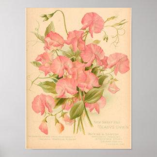 Sweet Peas Flowers Poster
