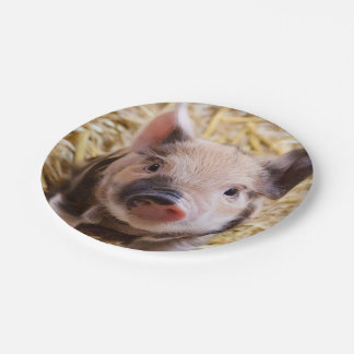sweet piglet 7 inch paper plate