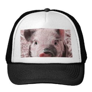 sweet piglet pink trucker hat