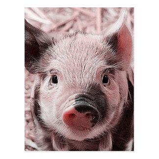 sweet piglet pink postcard