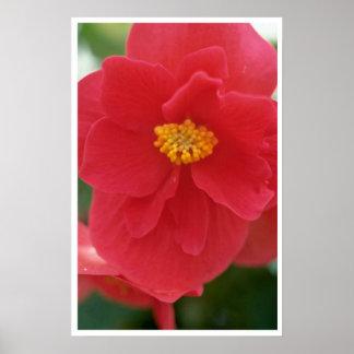 Sweet Pink Flower Print