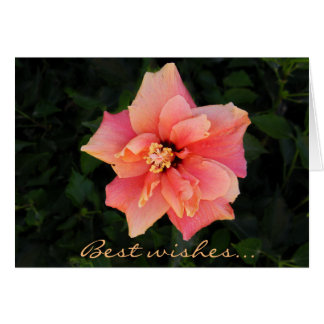 Sweet Pink Hibiscus Flower Custom Text Card