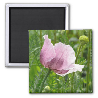 Sweet Pink Poppy with raindrops Square Magnet